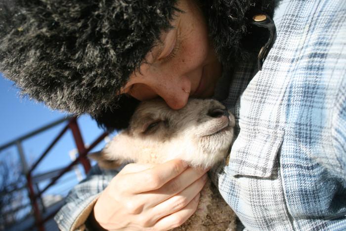 Year-Round Lambing, Oh My...