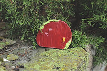 fairy door in the bush.jpg
