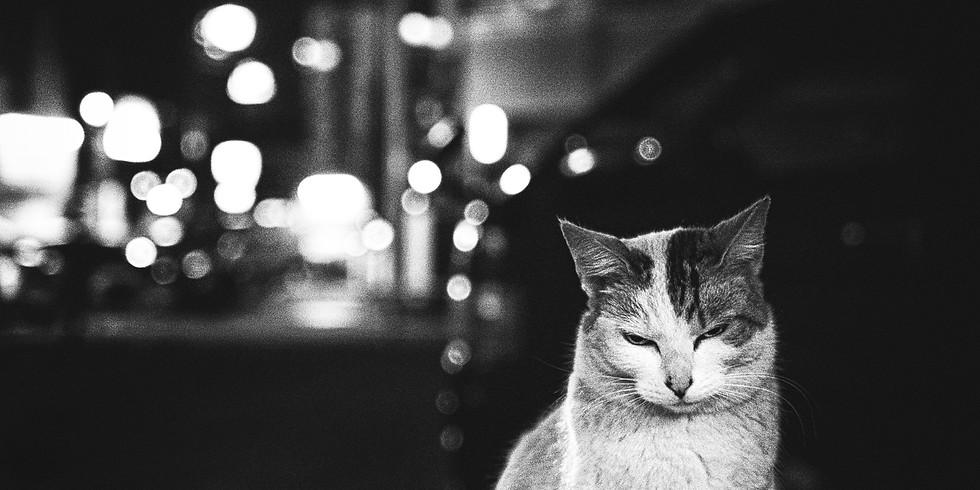 作品名「撫でさせてやらぬでもない近う寄れ」Cat's eyes love Yokohama