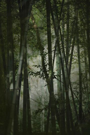 竹林 鎌倉山 檑亭