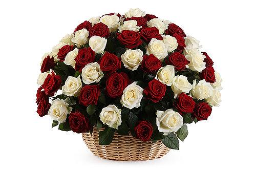 Белые,красные розы (101 шт.)