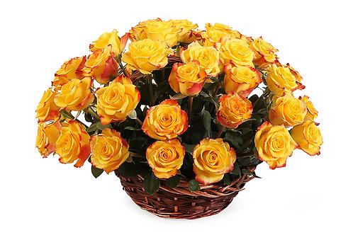 Оранжевые розы (51 шт.)