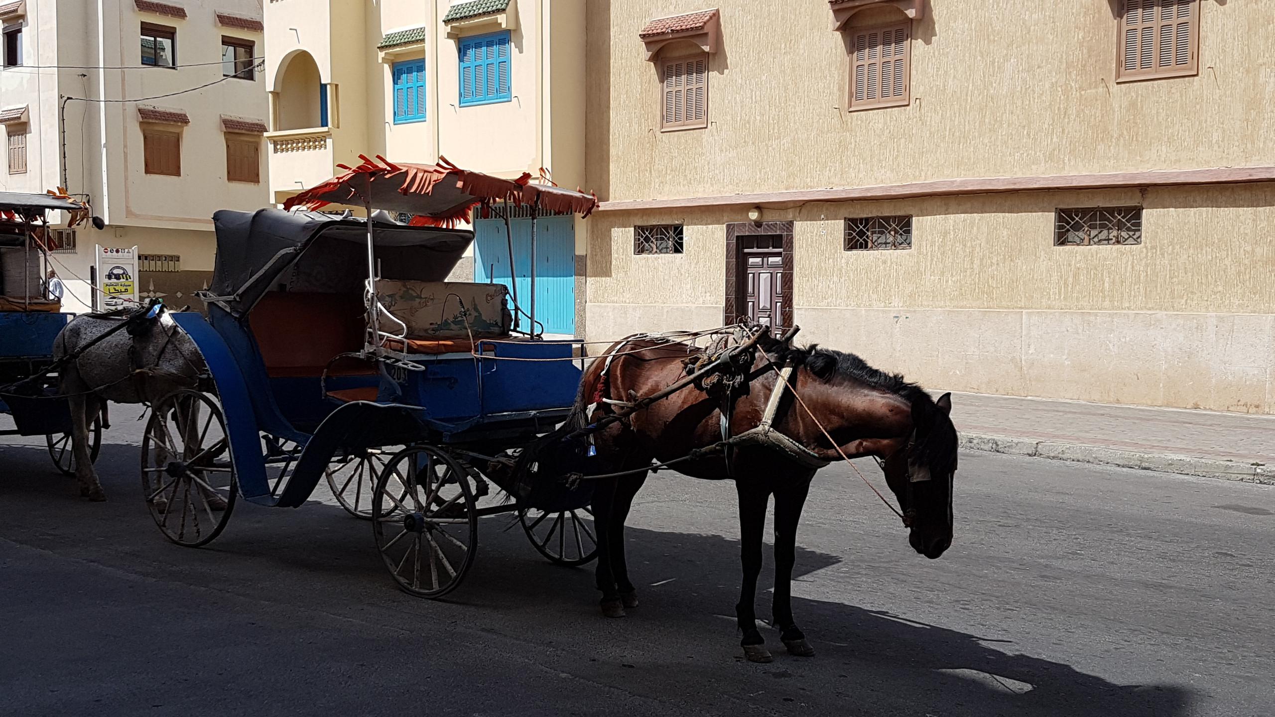Séjour_adapté_Maroc_juillet_2018_(47)