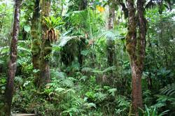 Parc National de Guadeloupe