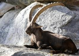 Zoo Alpin d'Innsbruck