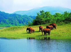 Réserve de Thekkady | Kerala
