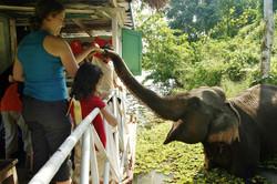 Camps d'éléphants | Kerala