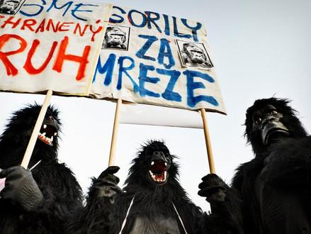 Príbeh Gorily a snahy, aby jej nahrávka nikdy neuzrela svetlo sveta