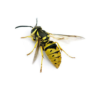 Hornet_2_500px_b.jpg