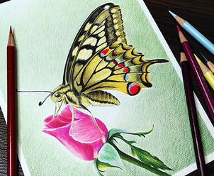 Dinamic-Butterfly.jpg