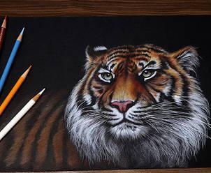 Dynamic-Tiger.jpg