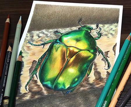 Dinamic-beetle.jpg