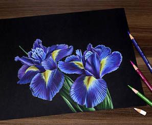 Iris-black.jpg