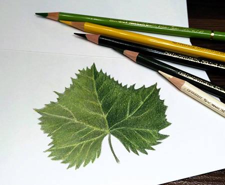 Dinamic-Leaf.jpg