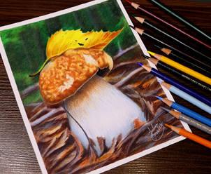 Dinamic-mushroom.jpg