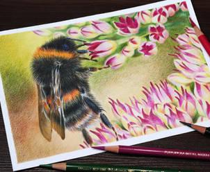 Dinamic-Bumblebee.jpg