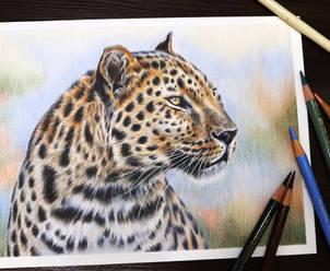 Dinamic-Leopard.jpg