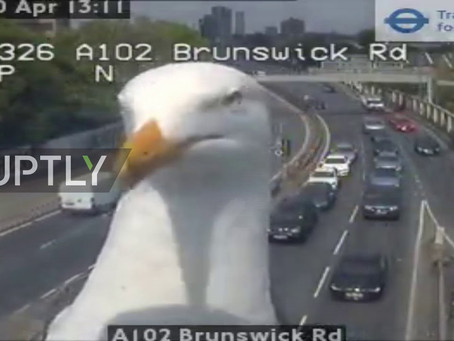Seagull caught on London traffic camera goes viral