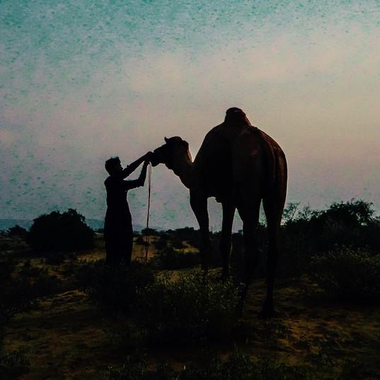 Rajasthan Cameleer, Jaisalmer