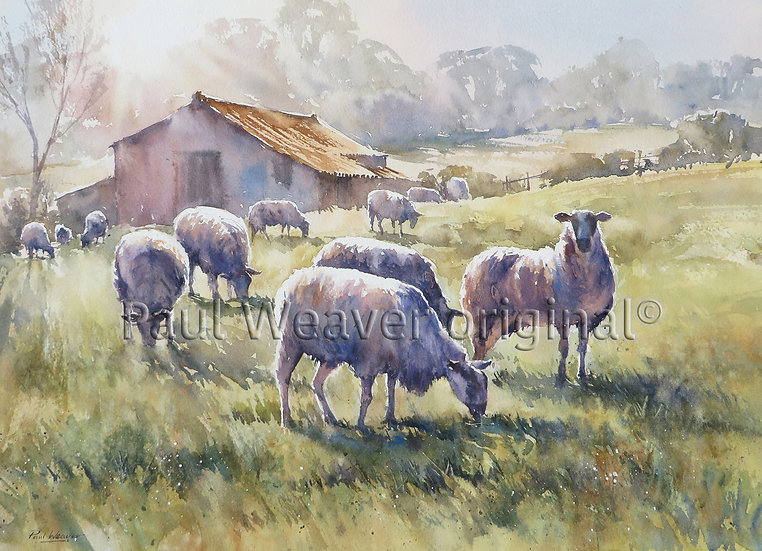 Sheep on the Water Meadows, Windrush