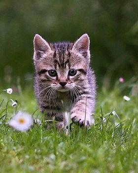 cat-kitten-grass.jpg