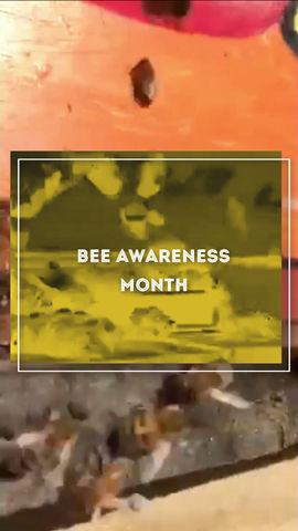 SEPTEMBER is Bee Awareness Month...BEE Happy!