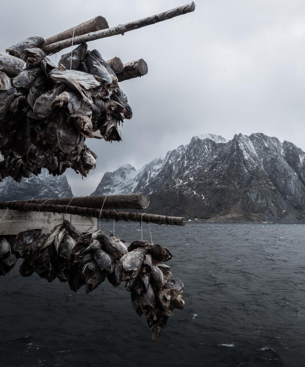 Fiskehoder på hjell