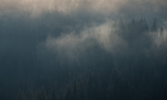 Skog og tåke