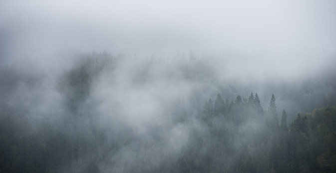 Tåke over skogen