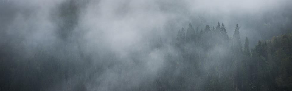 Tåke over skogkledte åser