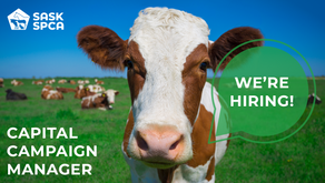 Join Our Team: Capital Campaign Manager