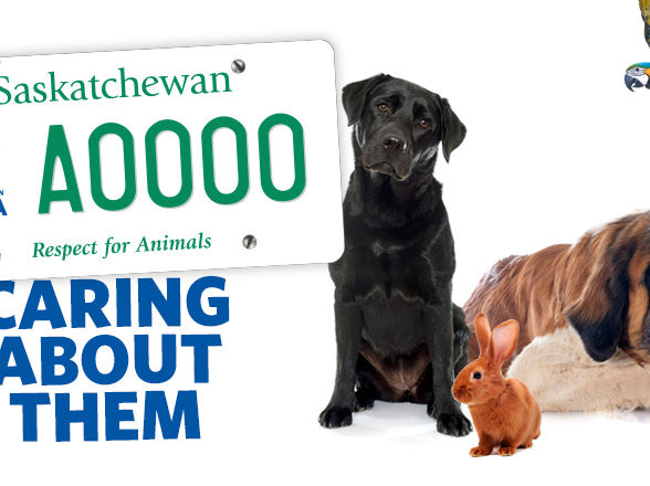 Saskatchewan SPCA Licence Plates