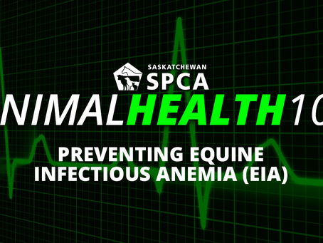 Preventing Equine Infectious Anemia