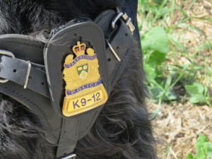 Police dogs are valuable members of the law enforcement team.