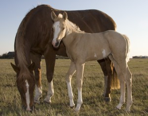 Backyard Horse Seminars