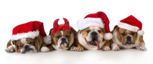 Keeping Your Pet Safe During the Holidays