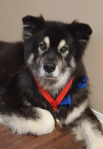 Rex, the Hawman family dog