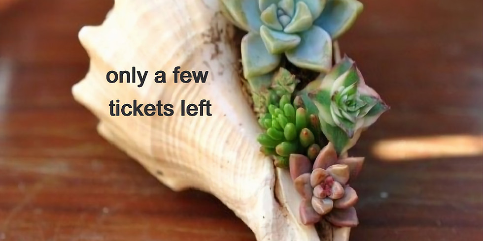 Succulent Shell Planter with Ginger