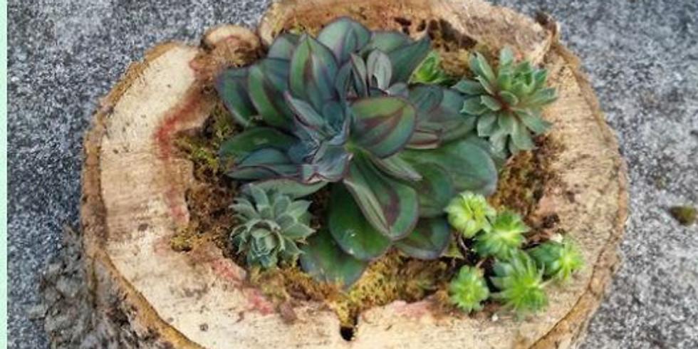 Natural Wood Premium Succulent Planter
