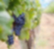 grapes-1952035.jpg