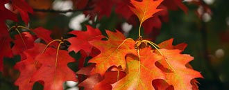 leaf-ppeping.jpg