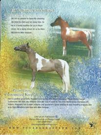 Pecan Grove Farm Ad Design