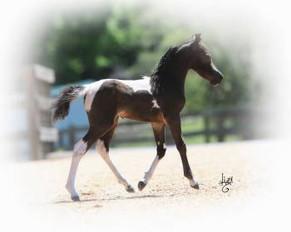 Pecan Grove Farm Foal Gallery