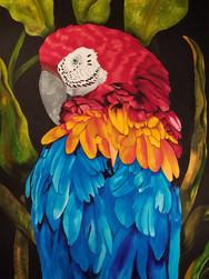 Redhead Macaw