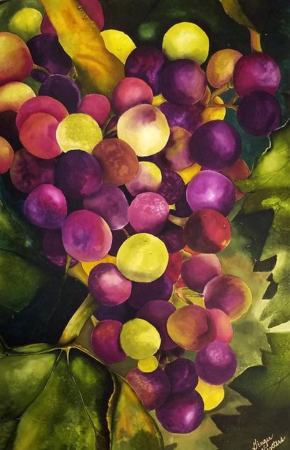 GWinters - Wine Varieties Grapes x Dye o