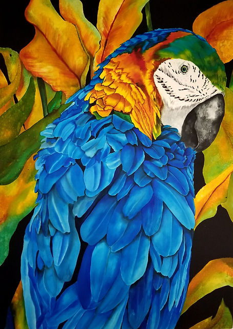 GWinters - Greenhead Macaw 30x40 Dye on