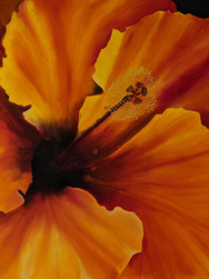 GWinters - Orange Hibiscus 24x18 Dye on
