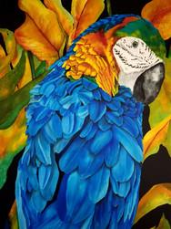Greenhead Macaw