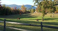 What is a Isothermal Belt and what Impacts does it have to Horse Farms in the Area?