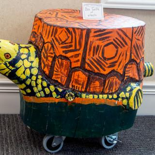 Box Turtle on Wheels